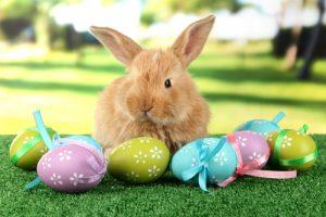 Easter Bunny with Easter eggs (Coelhinho da Páscoa com ovo de Páscoa)