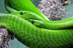 variaçoes do verde