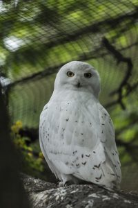 coruja owl wisdom
