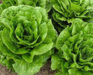 verduras em ingles
