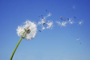 blow away ser levado pelo vento
